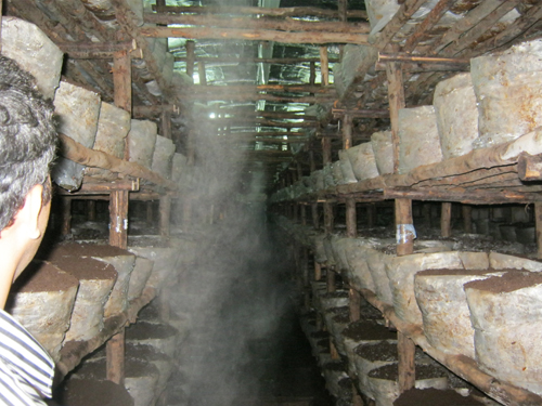 Misting System in India, Outdoor Cooling in India, Fogging